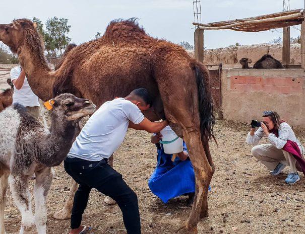 Moroccan Sahara Desert Trip 4